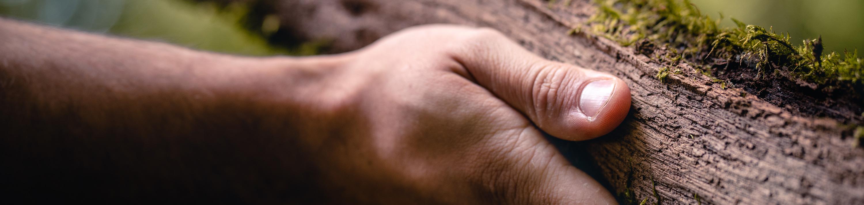 Hand auf Fallholz Detail